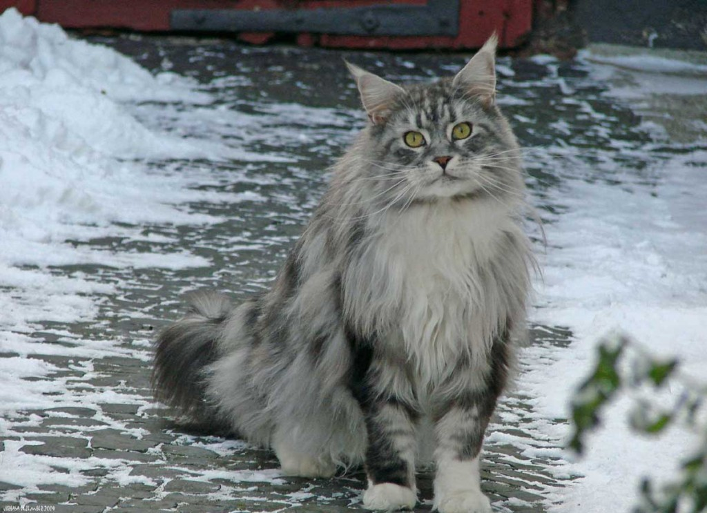 Can Cats Live Outside During The Winter?