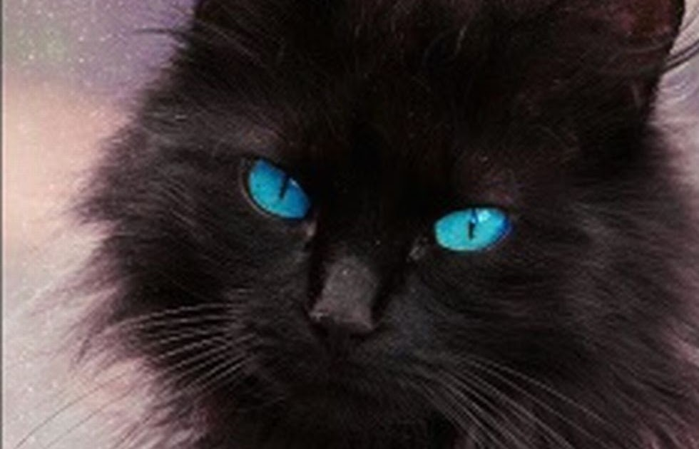 Maine Coon Eye Color Change
