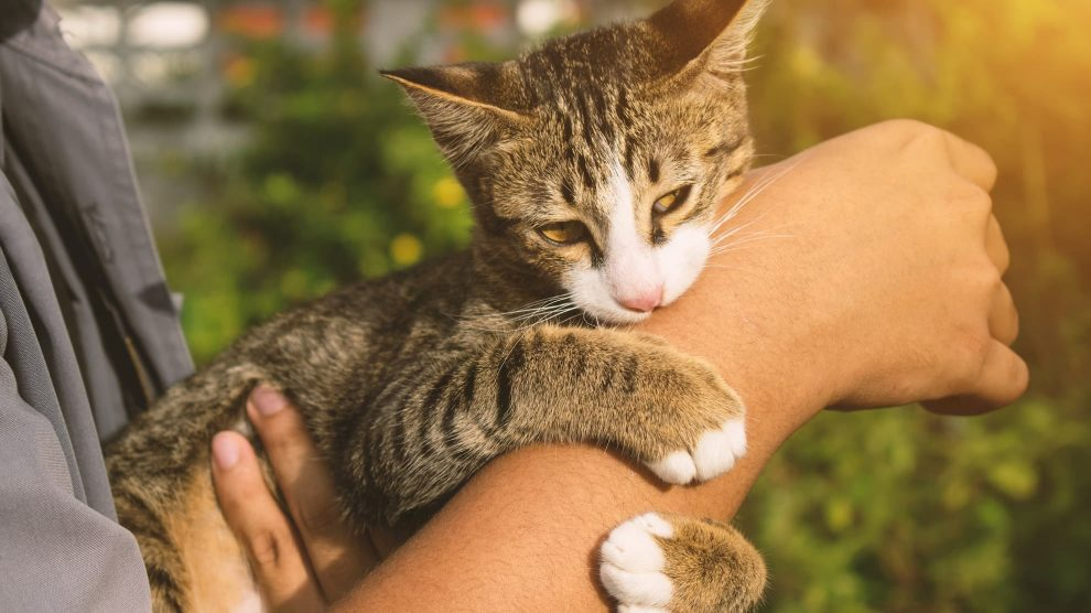 Why Does Your cat Grab You Hand and Bite You?